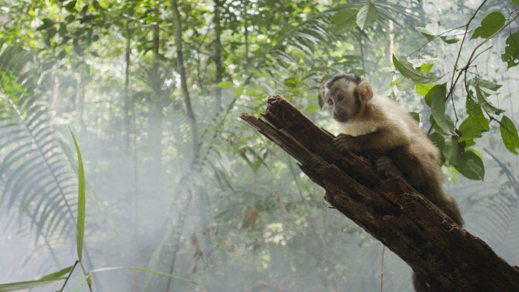 Амазония: инструкция по выживанию 5 в списке