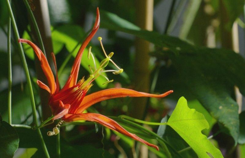 В королевстве растений 6 место в списке