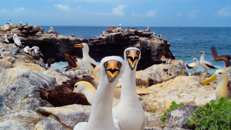 Галапагосы: Зачарованные острова 7 место в списке