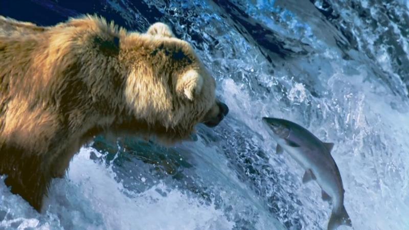 BBC: Величайшие явления природы 4 место в списке